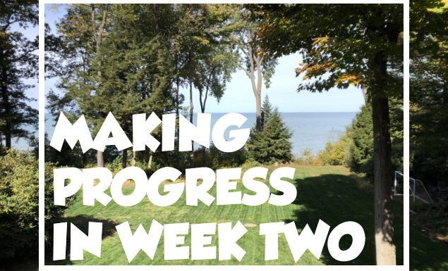 Lawn Renovation Update – 2 Weeks After OverSeeding